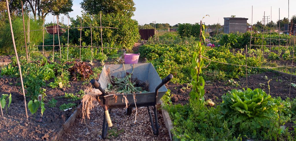 Allotment Wheelbarrows Featured