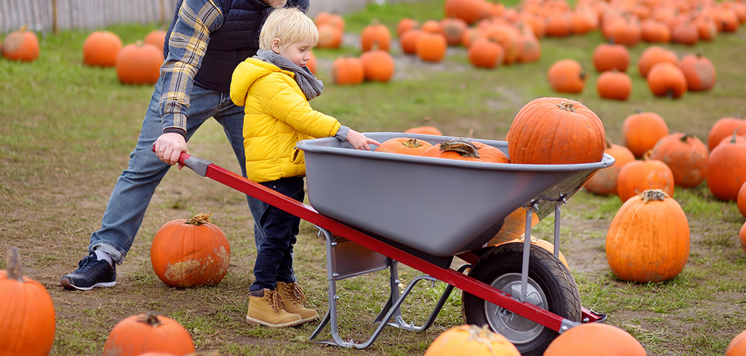 Best Large Wheelbarrows